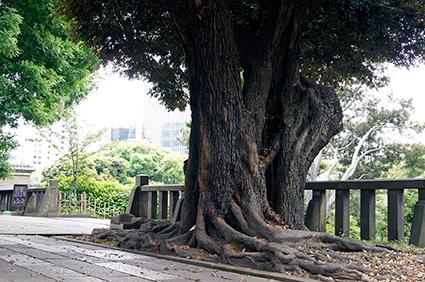 130608東京 湯島聖堂①