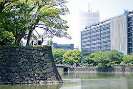 130608東京 震災銀杏⑦