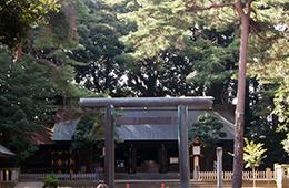 130928埼玉 大宮アカシデ⑤