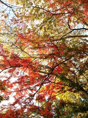 2013-10-27-koyo02.jpg
