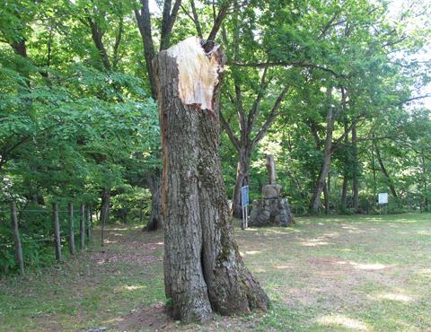 痛ましい木