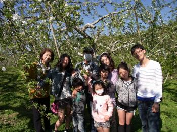 りんご花摘み体験