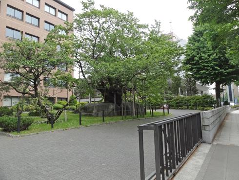盛岡石割桜2012-2