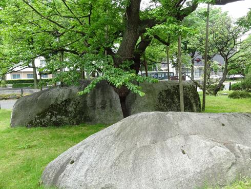 盛岡石割桜2012-7