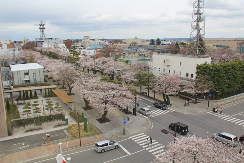 十和田官庁街と桜-1