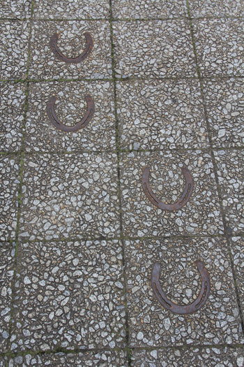 十和田官庁街と桜-5