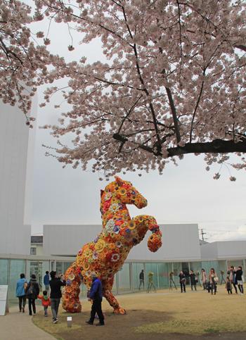 十和田官庁街と桜-10