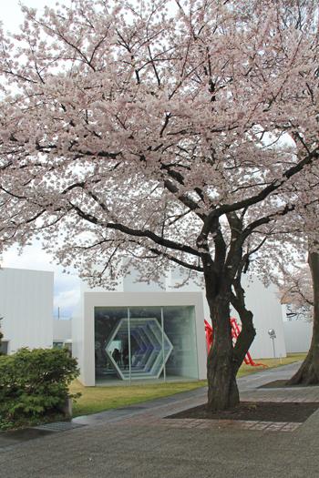 十和田官庁街と桜-13