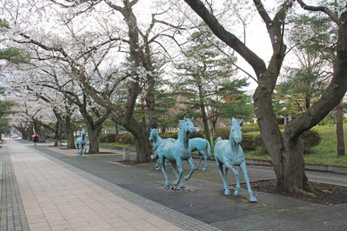十和田官庁街と桜-14