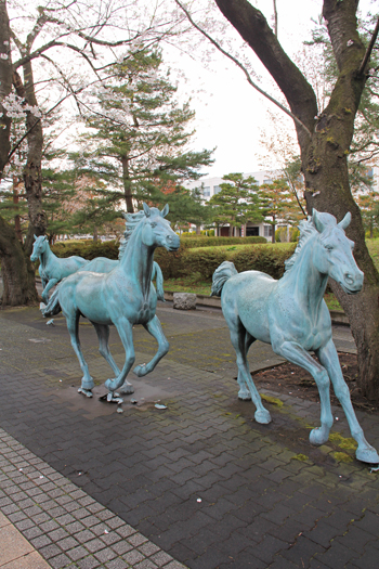 十和田官庁街と桜-15