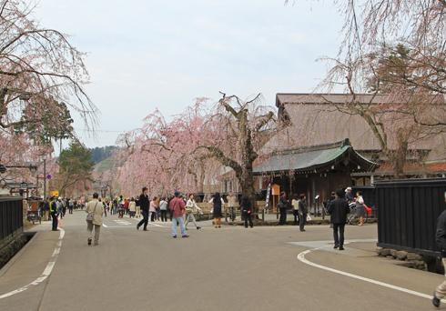 角館桜2013-3