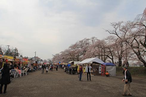 角館桜2013-13