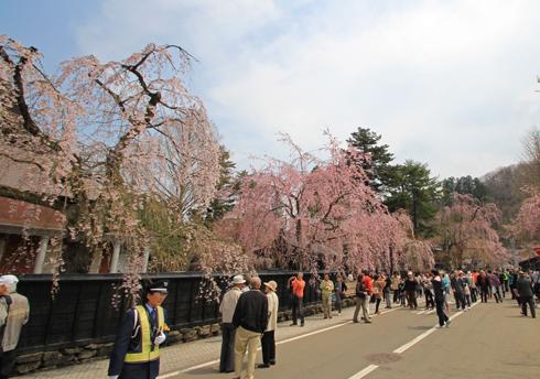 角館桜2013-14