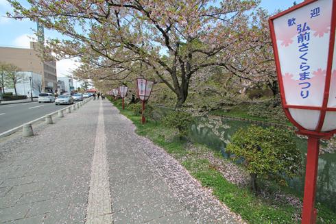 弘前桜祭2013-1