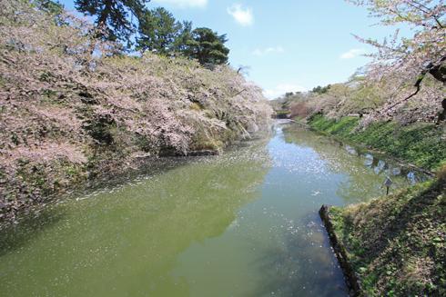 弘前桜祭2013-5