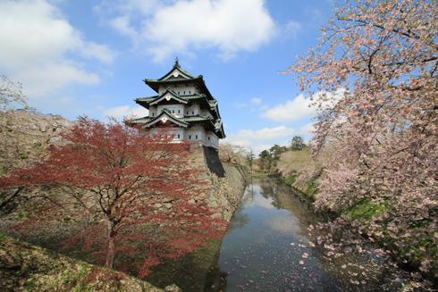 弘前桜祭2013-7