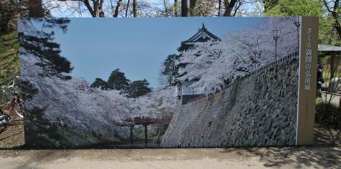 弘前桜祭2013-9