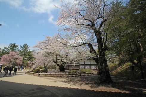 弘前桜祭2013-11