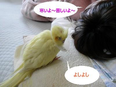 てんちゃん
