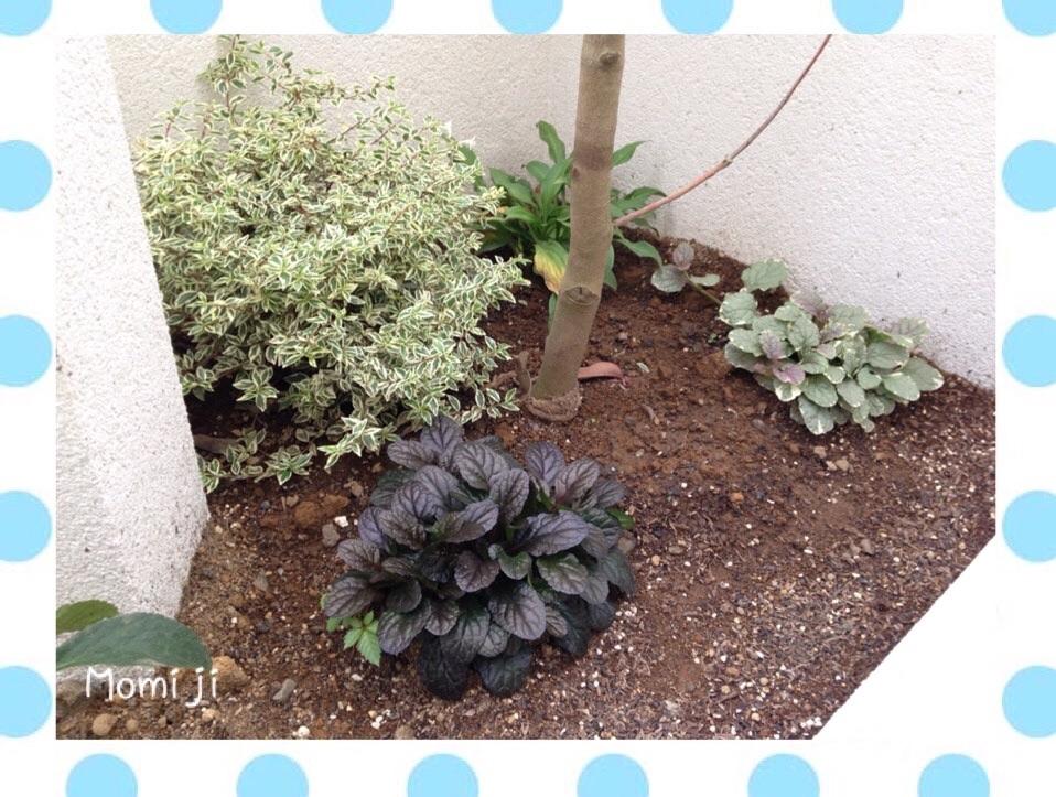 秘密の庭1