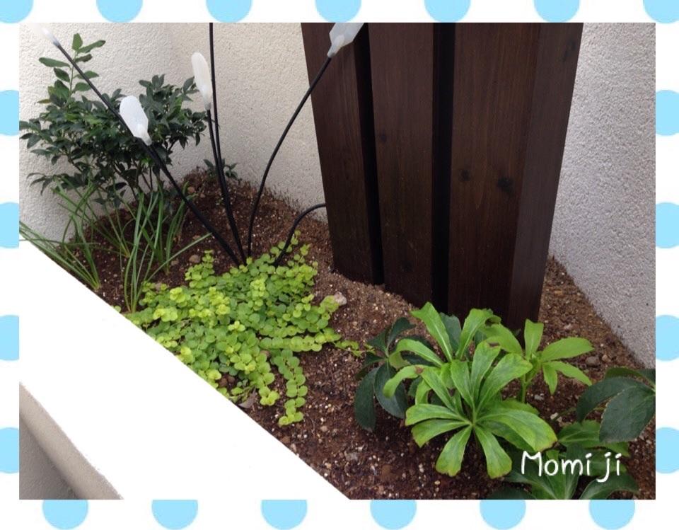 秘密の庭2