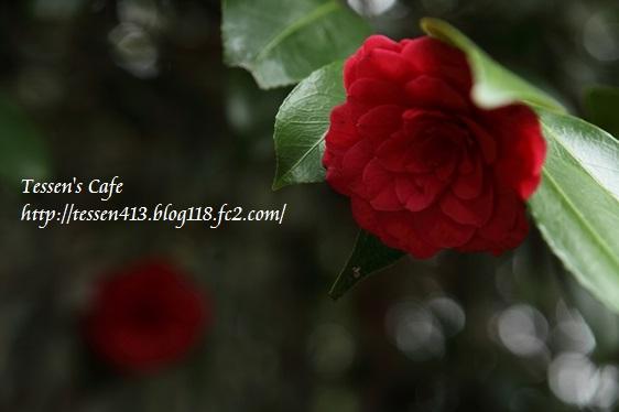 IMG_5361 - コピー