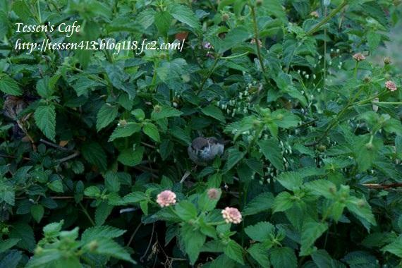 018 -sparrow