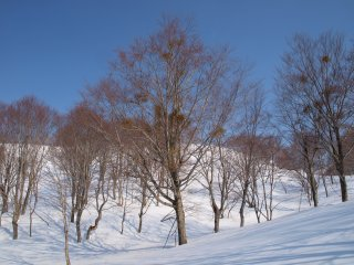 s02ブナと雪と青空