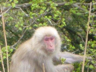 s07猿6