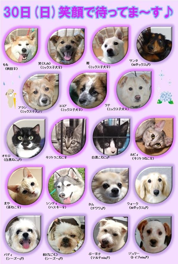 ALMA ティアハイム 6月30日 参加犬猫一覧