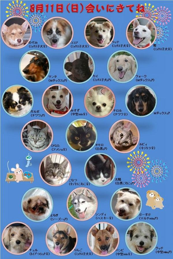 ALMA ティアハイム 8月11日 参加犬猫一覧