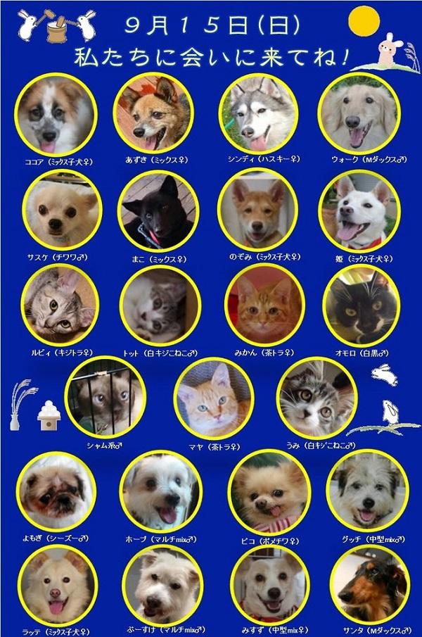 ALMA ティアハイム 9月15日 参加犬猫一覧