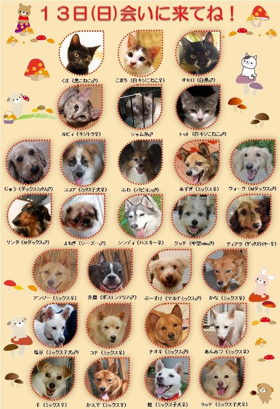 ALMA ティアハイム 10月13日 参加犬猫一覧 (548x800)