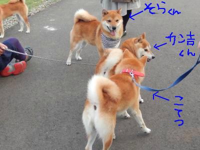 snap_tikagenoko414_20139313247.jpg