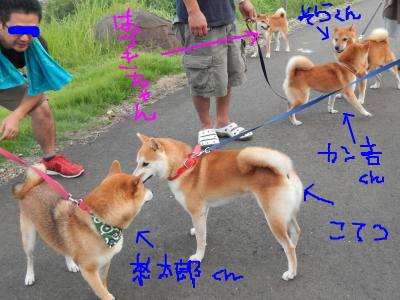 snap_tikagenoko414_201393134647.jpg