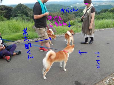 snap_tikagenoko414_20139314037.jpg