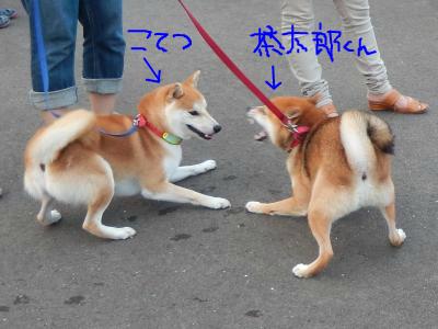 snap_tikagenoko414_20139323348.jpg