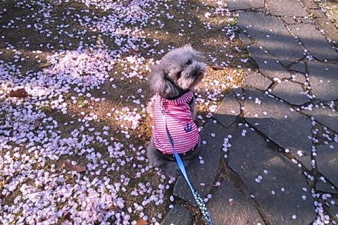 お散歩で花見