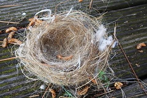 新しい鳥の巣