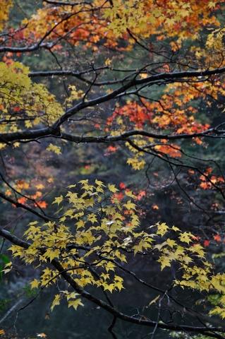 秋景その一