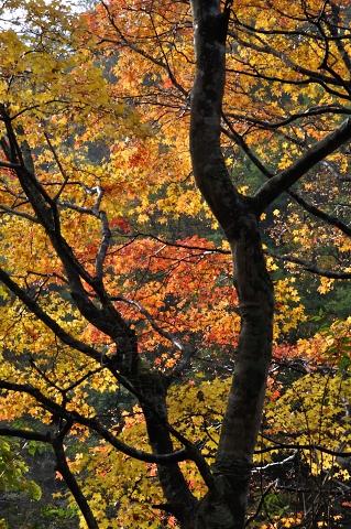 秋景その二