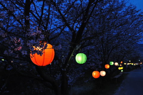 勝浦夜桜①