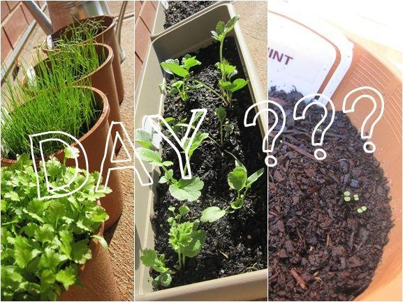 tmk plants