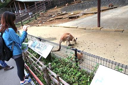 ソウル市立大学動物園