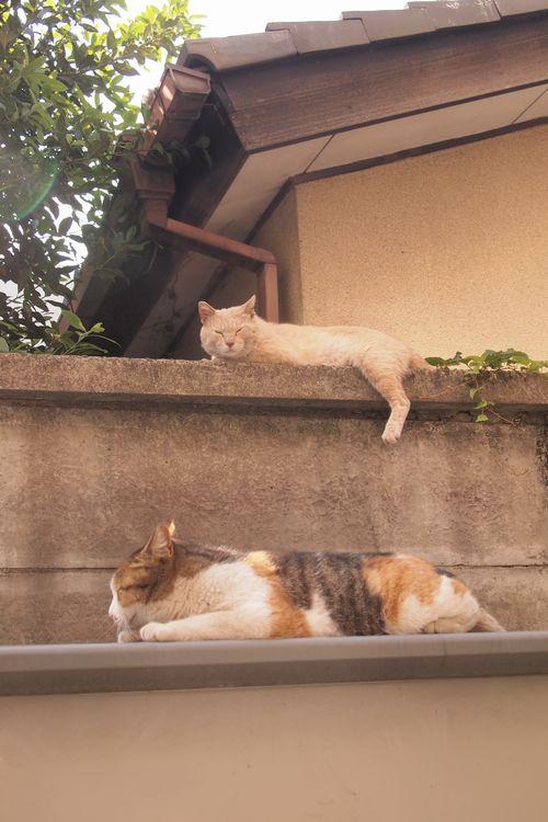 お昼寝 (C)東京ノラ猫&家猫カフェブログ