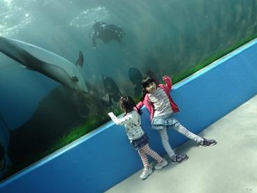 05 イルカのトンネル