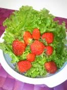 家採れ野菜