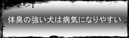001inu-nioi.jpg