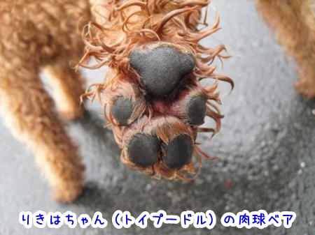 006rikiha-bear.jpg