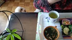 お昼御飯3